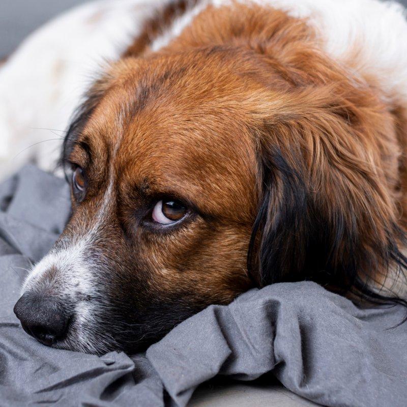 Stoppersocken Hund   Abs Socken Hund